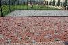 Блоки, Кирпич, ЖБИ, Камень объявление но. 5006: Брусчатка гранитная колотая лезники от производителя