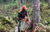 Ландшафтный дизайн, Благоустройство объявление но. 5038: услуги по спиливанию деревьев