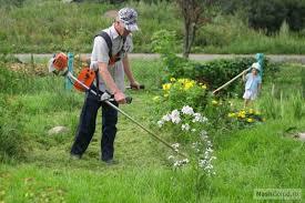 естественный закон о скашивании травы на участке продаже офисов